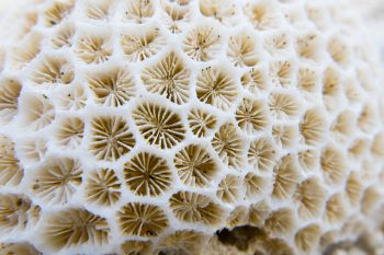 interesting texture from a closeup of coral rock